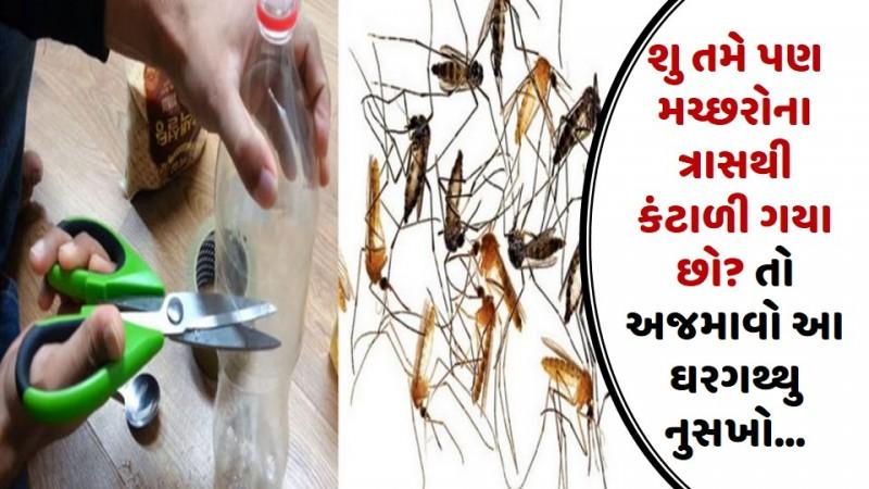 શુ તમે પણ મચ્છરોના ત્રાસથી કંટાળી ગયા છો? તો અજમાવો આ ઘરગથ્થુ નુસખો…